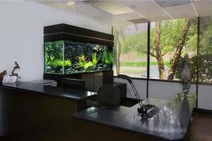 办公室鱼缸摆放位置风水禁忌,这些你都知道吗?