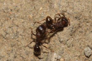 家里有蚂蚁是什么原因 家里有蚂蚁是什么征兆 家里有蚂蚁怎么办能根除