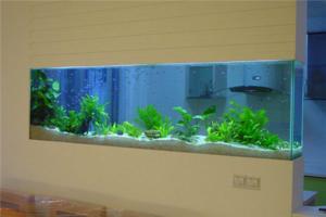 鱼缸水浑浊原因和解决方案 鱼缸水发白雾蒙蒙的 鱼缸水发黄的解决办法