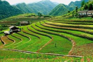 农村土地流转新政策2020 农村土地流转新政策怎么写流转合同 农村土地流转新政策什么时候开始
