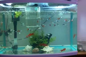 鱼缸过滤器哪种好?鱼缸过滤器一天多少度电?这篇文章为您详细解读!